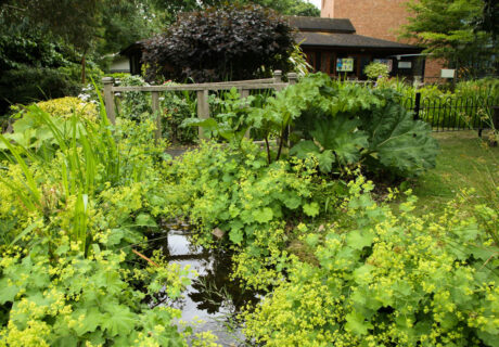 Virtual Open Garden Sydenham
