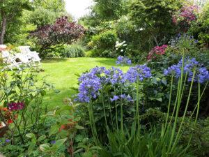 Virtual Open Gardens Goodhart Way