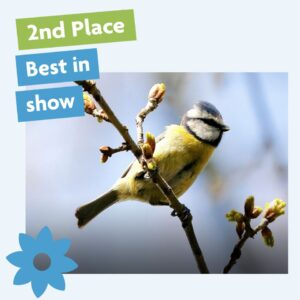Best in show blue tit