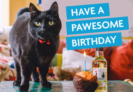 birthday ecard pawesome