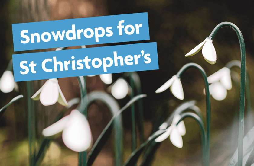 Snowdrops for
