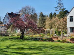 Manor Way Cherry blossom for web