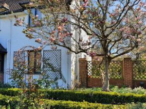 Manor Way Magnolia Tree